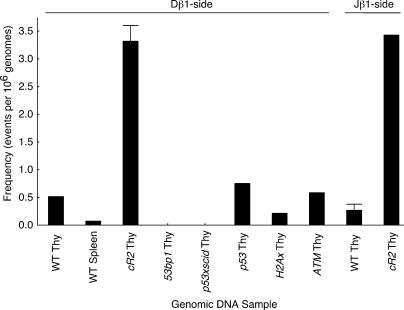 The frequency of d - or J-side RSS insertion into the b196 hotspot in wild-type and mutant mice. 85 1-μg (∼166,000 genome) samples of thymus or spleen DNA from the indicated mice were analyzed by PCR for either D or J RSS hotspot insertion events. Frequency was calculated according to the Poisson distribution. Error bars on the cR2 Thy and WT Thy samples indicate analysis of independent sets of 85 PCR assays from each of 3 different animals.