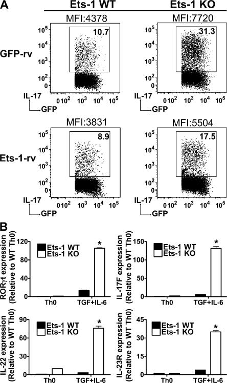 Increased IL-17 production by Ets-1 KO Th cells is reversible, and is associated with increased expression of Th17 markers. (A) Total Th cells from WT and Ets-1 KO mice were infected 2 d after activation under Th17 skewing conditions with either empty virus (GFP-rv) or virus expressing full-length Ets-1 isoform (Ets-1-rv). The panels are gated on GFP-positive cells. The production of IL-17 by the transduced (GFP-positive) cells was examined by ICS. Mean fluorescence intensity (MFI) of the IL-17-positive cells is indicated. Results are representative of three independent experiments. (B) After 5 d in culture in the indicated conditions, differentiated WT and Ets-1 KO Th cells were restimulated for 4 h with PMA/ionomycin, and the transcript levels of IL-17F, IL-22, IL-23R, and RORγt were measured by real-time PCR. Data are presented as the mean ± the SD and are representative of three independent experiments. *, P