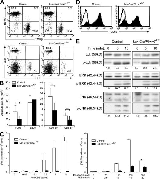 Proliferative defect of Fbxw7-deficient mature T cells. (A) Representative flow cytometric analysis of surface expression of TCRβ and B220 (top) or of CD4 and CD8 (bottom) on spleen cells from Fbxw7 F/F (control) or Lck-Cre/ Fbxw7 F/F mice at 8 wk of age. The respective percentages are indicated. (B) Absolute cell numbers of splenocyte subsets determined as in A. Data are means ± SD of values from 8 Fbxw7 F/F (control) and 14 Lck-Cre/ Fbxw7 F/F mice. ***, P