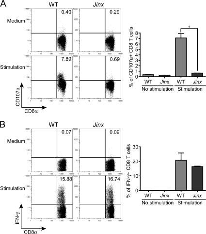 Jinx CD8 + T cells produce a normal amount of IFN-γ upon polyclonal stimulation with PMA/ionomycin but fail to degranulate. (A) Surface expression of CD107a. Inset numbers indicate percentage of cells with induced expression. (B) Up-regulation of intracellular IFN-γ. Graphs beneath each FACS illustration show data for three mice.