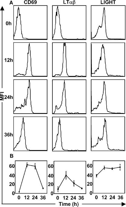 Expression of LTβR ligands on OTII CD4 + T cells in response to OVA antigen. Purified OTII T cells were adoptively transferred into C57BL/6 mice, which were then immunized with OVA. Thy1.1 + OTII T cells in the draining LNs were analyzed for the expression of CD69, LTαβ, and LIGHT. The expression of LTαβ and LIGHT on WT OTII T cells is demonstrated with representative histograms from five mice (A), and a kinetic analysis of expression of CD69, LTαβ, and LIGHT was generated (B). The experiment was performed twice with similar results. Expression on respective knockout T cells was insignificant over background (not depicted).