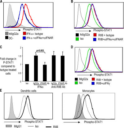 Induction of IFN response by anti-FcγRIIB antibody is not inhibited by blocking antibodies against IFN-α and IFN-γ. (A) Up-regulation of P-STAT1 by exogenous IFN-α is blocked by antibodies against IFN-α. Monocyte-derived IDCs were either left untreated (DC−) or treated with IFN-α2b (1,000 U/ml intron A). The DCs were either treated with a combination of blocking antibodies against IFN-α, as well as IFNAR (αIFNAR; both at 10 μg/ml) or with their isotype control antibodies (Isotype; mouse IgG1 and mouse IgG2a, respectively; both at 10 μg/ml) for 45 min before treatment with IFN-α. The DCs were analyzed for their expression of P-STAT1 by flow cytometry. Gray area of the histogram shows staining of the DCs with isotype control (Mouse IgG2a) for P-STAT1 antibody. The graph represents one of two similar experiments. (B) Effect of blocking antibodies against IFN-α on anti-FcγRIIB–mediated induction of P-STAT1. Monocyte-derived IDCs were treated with anti-FcγRIIB antibody (5 μg/ml RIIB) or mouse IgG1 isotype control antibody (Iso). DCs treated with anti-FcγRIIB antibody were either treated with blocking antibodies against IFN-α and IFNAR (10 μg/ml RIIB + αIFNa + αIFNAR) or isotype control antibody (RIIB + Isotype; 10 μg/ml mouse IgG2a and 10 μg/ml IgG1, respectively) for 45 min before the addition of anti-FcγRIIB antibody. 24 h later, flow cytometry was performed to examine the expression of P-STAT1. Some DCs were also stained with mouse IgG2a, which is isotype control for the P-STAT1 antibody. One of two similar experiments. (C) Effect of anti-IFNAR blocking antibody on anti-FcγRIIB–mediated induction of P-STAT1. Freshly isolated PBMCs were treated with IFN-α2b (1,000 U/ml intron A) or anti-FcγRIIB antibody and an isotype control antibody either in the presence of 20 μg/ml IFNAR antibody (IFNAR Ab) or isotype control antibody (mouse IgG2a). 1 h later, flow cytometry was performed to examine the expression of P-STAT1 on CD14+ monocytes. Data shown are the summary of three s