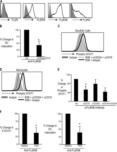 Role of activating FcγRs in the FcR-mediated DC maturation and induction of P-STAT1. (A) Expression of FcγRI, RIIA, RIIB, and RIIIA on DCs generated from CD14+ monocytes by flow cytometry. Day 5 monocyte-derived IDCs were examined for the expression of FcγR1, FcγRIIA, FcγRIIB, and FcγRIII by flow cytometry. The area in gray represents staining with isotype control antibodies. Figure represents one of six similar experiments. (B) Down-regulation of anti-FcγRIIB antibody induced DC maturation by blocking antibodies against activating FcγR. IDCs ( n = 4) were treated with isotype control antibody or anti-FcγRIIB antibody either with blocking antibodies against CD32A and CD16 antibody (αCD32A + αCD16; clone IV.3 and 3G8, both at 10 μg/ml) or their isotype control antibodies (Isotype; mouse IgG2a and IgG1, respectively). 24 h later, the expression of CD80 and CD83 was monitored by flow cytometry, and the double-positive cells were used to assess DC maturation. Change in maturation between isotype-treated and anti-FcγRIIB–treated DCs was considered as 100%. The figure shows the percentage of decrease in maturation of DCs treated with blocking antibodies against the activating FcγR (CD32A and CD16). Data are a summary of four similar experiments. *, P