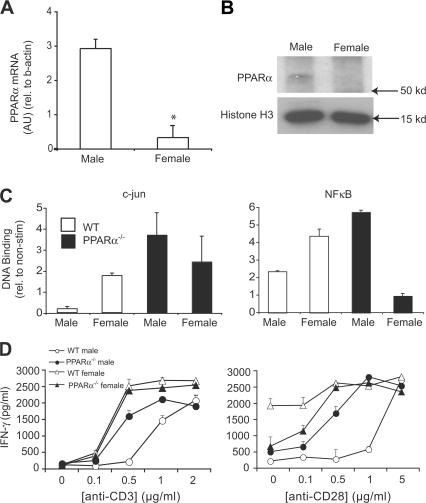 PPARα was more abundant in male as compared with female T cells and was associated with decreased NF-κB and c-jun activity and increased IFN-γ production. (A) Total RNA was obtained from naive CD4 + T cells that were pooled from the spleens of male and female SV.129 mice ( n = 4 mice/group). The expression of PPARα mRNA in these cells was measured using real-time RT-PCR, and abundance was expressed relative to β-actin mRNA. Values are means ± SEM of PPARα/β-actin product abundance in triplicate reactions expressed in arbitrary units (AU). (B) Western blot analysis of PPARα in nuclear extracts (250 μg) prepared from male and female T cells. Histone H3 was used as a loading control. (C) c-jun (left) and NF-κB (right) DNA binding was measured in nuclear extracts from male and female SV.129 WT or PPARα −/− CD3 + T cells using an ELISA-based assay. Nuclear extracts were prepared from T cells at 16 h after stimulation with 5 μg/ml anti-CD3 and 5 μg/ml anti-CD28. Values are means ± SEM of absorbance units (duplicate culture wells) of stimulated wells expressed relative to absorbance in nonstimulated control wells. (D) CD3 + T cells from male and female SV.129 WT or PPARα −/− mice were stimulated with 0–2 μg/ml anti-CD3 (left) and 0–5 μg/ml anti-CD28 (right). IFN-γ production in culture supernatants was measured by ELISA at 72 h after stimulation. Values are means ± SEM of triplicate culture wells. Note that anti-CD28 and anti-CD3 were held constant at 0.5 μg/ml in the left and right panels, respectively. Results in A–D are representative of two independent experiments.