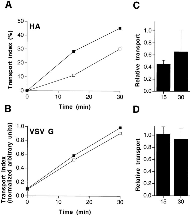 Removal of cholesterol from BHK cells affects TGN-to-surface transport of influenza virus HA, but not of VSV G. ( A and B ) Representative example of a TGN-to-surface transport. BHK cells were treated with lovastatin/mevalonate and methyl-β-cyclodextrin as detailed in Materials and Methods. After pulse labeling with [ 35 S]methionine and a TGN block at 19.5°C, viral proteins ( A , HA ; B , VSV G ) were chased to the cell surface for different times at 37°C. Arrival on the surface was detected by trypsin treatment ( HA ) or by surface immunoprecipitation ( VSV G ), respectively. ▪, untreated control cells; □, cells treated with lovastatin/mevalonate and methyl-β-cyclodextrin. ( C and D ) Averaged data of four independent experiments. Relative transport indices for HA ( C ) and VSV G ( D ) after 15 and 30 min of incubation at 37°C were calculated from four experiments. Transport in cells treated with lovastatin/mevalonate and methyl-β-cyclodextrin was expressed relative to the transport in untreated control cells at the respective time.