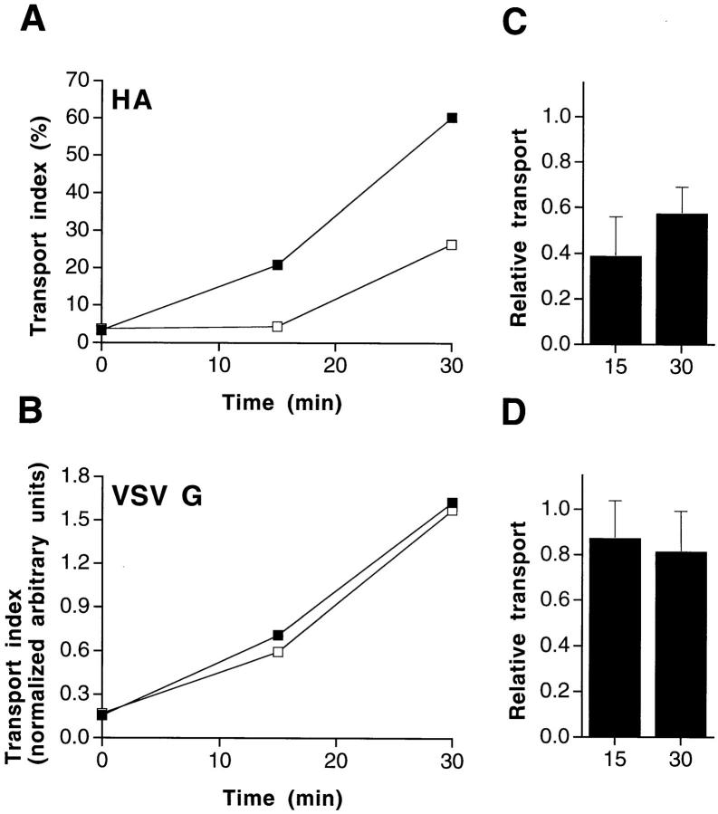 Removal of cholesterol from MDCK cells affects TGN–apical surface transport of influenza virus HA, but not basolateral VSV G transport. ( A and B ) Representative example of a TGN-to-surface transport. Filter-grown MDCK cells were treated with lovastatin/mevalonate and methyl-β-cyclodextrin as detailed in Materials and Methods. After pulse labeling with [ 35 S]methionine and a TGN block at 19.5°C, viral proteins ( A , HA ; B , VSV G ) were chased to the cell surface for different times at 37°C. Arrival of HA on the apical surface was detected by trypsin treatment. Basolateral arrival of VSV G was detected by surface immunoprecipitation. ▪, untreated control cells; □, cells treated with lovastatin/mevalonate and methyl-β-cyclodextrin. ( C and D ) Averaged data of five independent experiments (see Fig. 4 ).