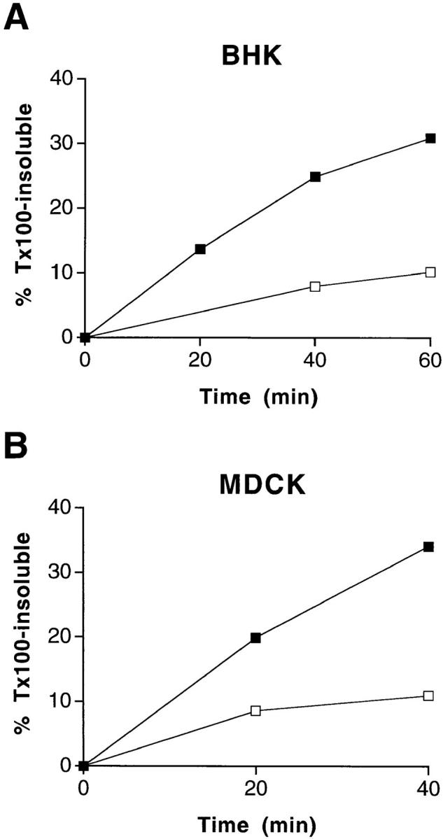Treatment of BHK and MDCK cells with methyl- β-cyclodextrin leads to increased Triton X-100 solubility of influenza virus HA. BHK cells ( A ) and filter-grown MDCK cells ( B ) were treated with lovastatin/mevalonate and methyl-β-cyclodextrin as detailed in Materials and Methods. The cells then were extracted on ice with 1% Triton X-100, followed by centrifugation at 120,000 g to obtain detergent-soluble and -insoluble fractions. ▪, untreated control cells; □, cells treated with lovastatin/mevalonate and methyl-β-cyclodextrin.
