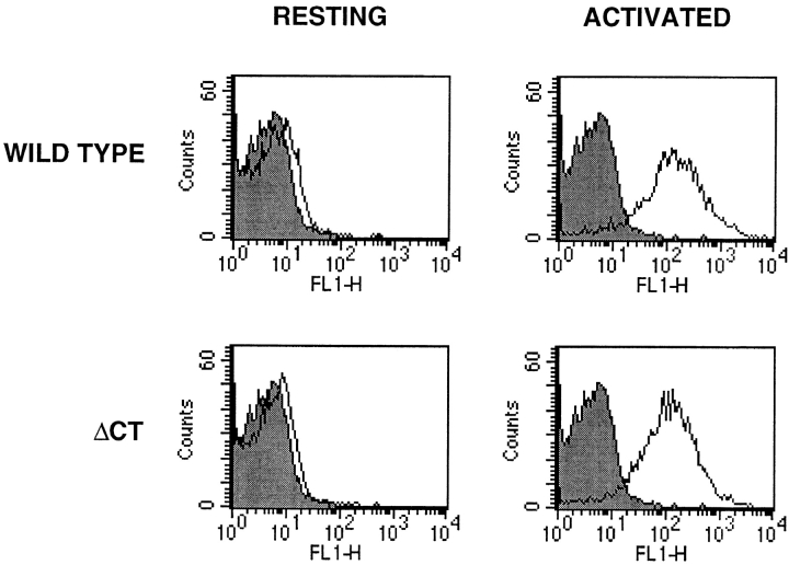 Flow cytometry analysis of P-selectin expression on platelets. Wild-type and ΔCT platelets were stained for membrane P-selectin and analyzed by flow cytometry. In the resting state, platelets of both genotypes displayed virtually no P-selectin on their plasma membranes. Thrombin activation induced in wild-type as well as in mutant platelets a similar increase in mean fluorescence with ∼90% of P-selectin–positive platelets. Representative histograms are shown. Shaded area , negative control staining with only the FITC-conjugated goat anti–rabbit IgG.