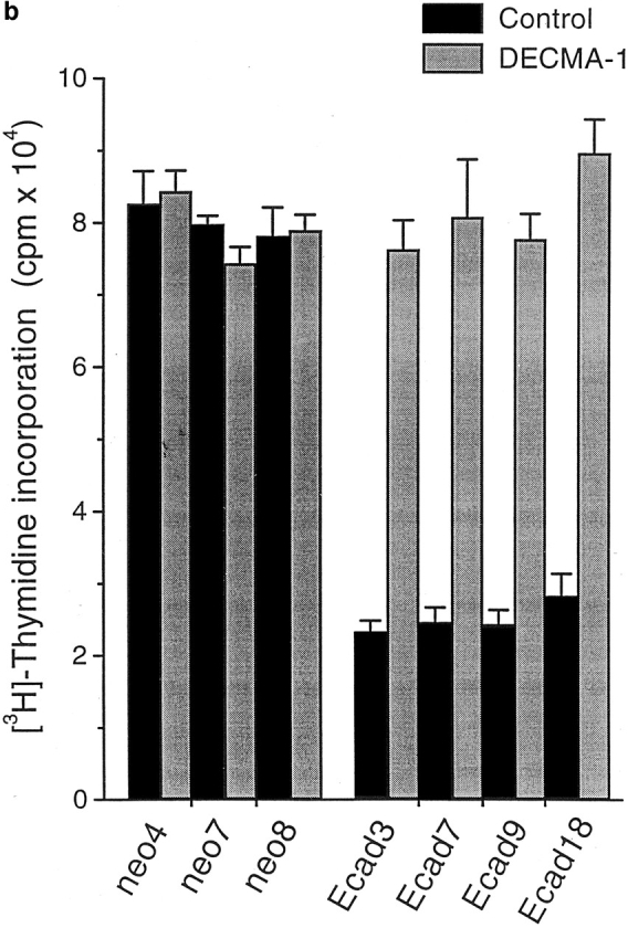 E-cadherin suppresses growth of EMT/6 cells in three-dimensional culture. ( a ) Proliferation of EMT/6 cells transfected with E-cadherin ( Ecad 9) or neomycin vector alone ( neo1 ) as measured by BrdU incorporation into DNA. 24 h after plating in three-dimensional culture, cells were either untreated (−BrdU) or pulsed with BrdU (+BrdU) for a further 24 h. Cells were prepared as described in the Materials and Methods, and cell cycle profiles were analyzed by flow cytometry. Tightly adherent or hyaluronidase ( HYase ) dispersed Pc5-T cells were also included as an additional control. ( b ) Proliferation of neomycin-resistant control transfectants ( neo4 , neo7 , neo8 ) or E-cadherin transfectants ( Ecad3 , Ecad7 , Ecad9 , and Ecad18 ) as measured by [ 3 H]thymidine incorporation into DNA. Intercellular adhesion of E-cadherin transfectants was prevented by treatment with 2 μg/ml DECMA-1 antibody at the time of plating.
