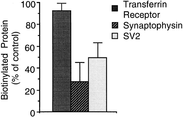 SV2 is accessible to MesNa after biotinylation at 18°C. PC12 cells were incubated with sulfo-NHS-SS– biotin for 30 min at 18°C, chased for 5 min at 18°C in the presence of glycine, and incubated at 4°C in the absence ( control ) or presence of extracellularly added MesNa. Transferrin receptor, synaptophysin, and SV2 in the postnuclear supernatants were analyzed for binding to streptavidin–agarose by immunoblotting of bound and unbound material with the respective antibodies. Streptavidin-bound biotinylated transferrin receptor, synaptophysin, and SV2 present in the postnuclear supernatant were calculated as percentage of total (sum of streptavidin-bound plus streptavidinunbound transferrin receptor, synaptophysin, and SV2, respectively), and the individual values obtained after MesNa treatment were expressed as percentage of control. Data are the mean of three independent experiments; bars indicate SD. The mean values of biotinylated protein for the control condition were 25.3% ( transferrin receptor ), 7.5% ( synaptophysin ), and 3.1% ( SV2 ).