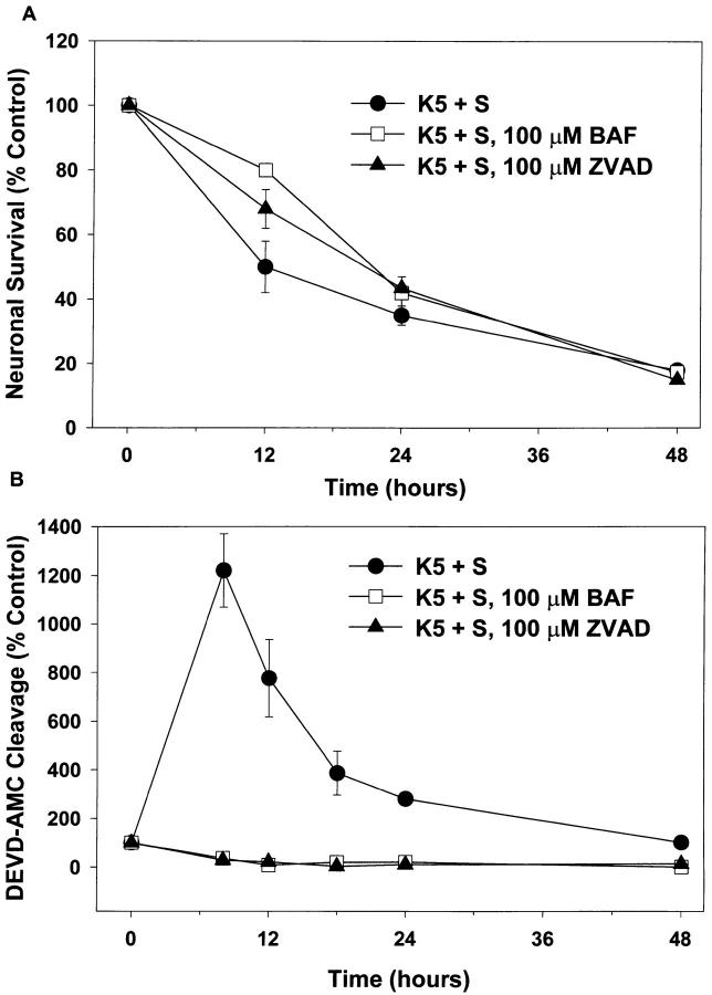 Inhibitors of caspases do not block death, but do block DEVD-AMC cleavage. Cultures were switched to K5+S, K5+S plus 100 μM BAF, or K5+S plus 100 μM ZVAD-FMK. Control cultures were switched to K25+S medium. ( A ) After 12, 24, or 48 h neuronal survival was determined by calcein AM staining. (mean ± SD, N = 3 experiments) ( B ) After 8, 12, 18, 24, or 48 h cultures were lysed and assayed for DEVD-AMC cleavage. Fluorescence was measured after 20 min at room temperature (mean ± range, N = 2 experiments).