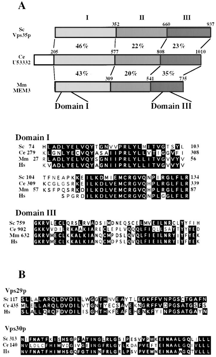 VPS35 , VPS30, and <t>VPS29</t> are highly conserved in eukaryotes. ( A ) Schematic view of homology between Vps35p and proteins found in the C. elegans and M. musculus proteomes. The numbers between the proteins are percent identities between Vps35p and the other two proteins. In the lower section, the two most highly conserved domains (designated domains I and <t>III)</t> are aligned to show the regions of greatest homology between the yeast, mouse, nematode, and also human homologues. The black boxes indicate completely conserved residues. ( B ) Alignments between Vps29p and homologues present in the proteomes of C. elegans and H. sapiens , and also alignments between Vps30p and homologues present in the proteomes of C. elegans and H. sapiens . Black shaded regions indicate areas that are completely conserved.