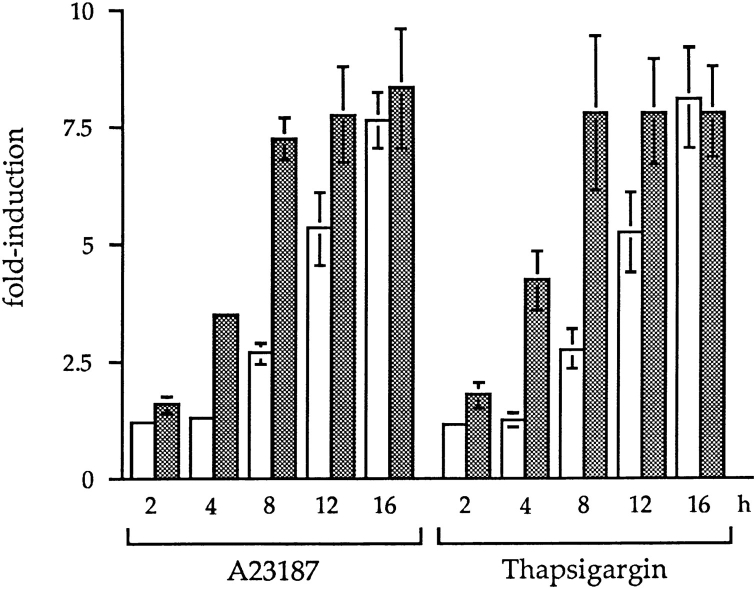 The kinetics of activation of the calreticulin promoter by A23187 and thapsigargin treatment. NCB1 cells (stably expressing CAT under control of the calreticulin promoter and β-galactosidase) were incubated with 7 μM A23187, 100 nM thapsigargin, or DMSO (control cells) for the times indicated. At different time points, cells were either harvested ( open bars ) or washed with PBS and then incubated in drug-free media to a total of 16 h of incubation ( cross-hatched bars ). CAT protein levels and β-galactosidase activity were measured as described in Materials and Methods. Data are reported as a mean ± SD of four separate experiments performed in triplicate.