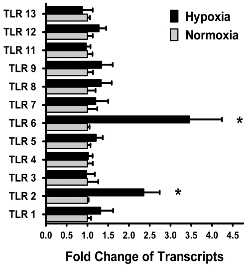 Influence of hypoxia on TLR mRNA expression in murine dendritic cells. Isolated murine bone-marrow-derived dendritic cells (BMDCs) were exposed to normoxia or hypoxia for 24 hours. Total RNA was isolated, and quantitative mRNA levels of TLR1-9 and TLR11-13 were assessed by real-time RT-PCR. Data were calculated relative to ß-actin and expressed as fold change relative to normoxia±SEM and transcript levels in normoxic BMDCs were normalized to 1. Results are derived from three different experiments (*p