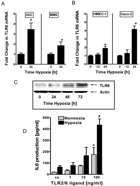 TLR6 transcript, protein and function during hypoxia. A and B , Quantification of TLR6 transcripit levels in freshly purified blood DCs, MM6 cells, confluent HMEC-1 monolayers and confluent Caco-2 monolayers. Cells were exposed to normoxia and hypoxia for indicated time points. Total RNA was isolated and TLR6 mRNA levels were determined by real-time RT-PCR. Data were calculated relative to ß-actin and expressed as fold change relative to normoxia±SEM, where transcript levels in normoxic cells were normalized to 1. Results are derived from three different experiments. *, significant differences from normoxic cells (p
