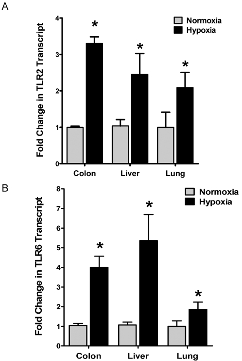 Expression of TLR2 and TLR6 during ambient hypoxia in vivo. A and B , Expression of TLR2 and TLR6 mRNA in normoxic or hypoxic organs. Tissue of Colon, Liver and Lung where harvested from mice after exposure to normoxia or normobaric hypoxia (8% O2, 92% N2 for 6h). Total RNA was isolated, and quantitative mRNA levels of TLR2 and TLR6 were assessed by real-time RT-PCR. Data were calculated relative to ß-actin and expressed as fold change relative to normoxia±SEM and transcript levels in normoxic organs were normalized to 1. Results are derived from six animals in each condition (*p