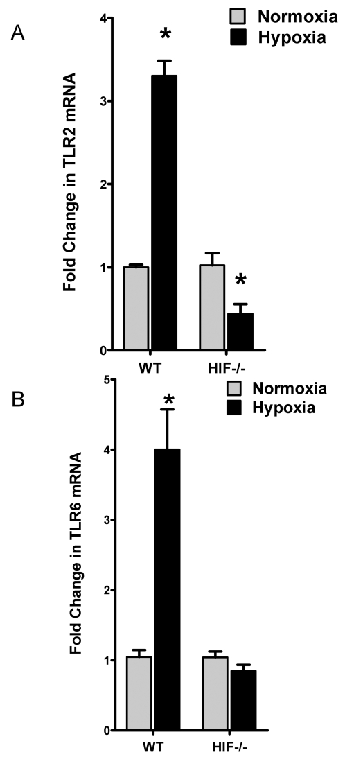 Role of hypoxia inducible factor (HIF)-1 in TLR2 and TLR6 expression during hypoxia in vivo. Real-time RT-PCR analysis of murine epithelial TLR2 and TLR6 mRNA in conditional HIF-1α mutant (HIF-/-) and littermate control (WT) animals subjected to normoxia or hypoxia. Data were calculated relative to ß-actin and are expressed as fold change over normoxia±SEM, where transcript levels of control animals were normalized to 1. *, significant differences from normoxic control animals (p