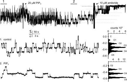 A typical response of ENaC to exogenous PI(3,4,5)P 3 . Shown is a representative current trace from an excised, outside-out patch (V p = 0 mV) formed from a CHO cell expressing wild-type ENaC before and after addition of 20 μM exogenous diC8 PI(3,4,5)P 3 . PI(3,4,5)P 3 added to the bathing solution in the presence of <t>histone</t> H1 carrier. Amiloride subsequently added to the bath solution toward the end of the experiment. This representative patch contains, at least, five ENaC. Shown at top is a continuous trace. Shown below (left) at an expanded timescale are regions of the trace before (1. control; middle) and after (2. PIP 3 ; bottom) addition of exogenous phosphoinositide. Respective all-point histograms for the regions shown at an expanded time-scale are to the right. All other conditions the same as Fig. 3 A .
