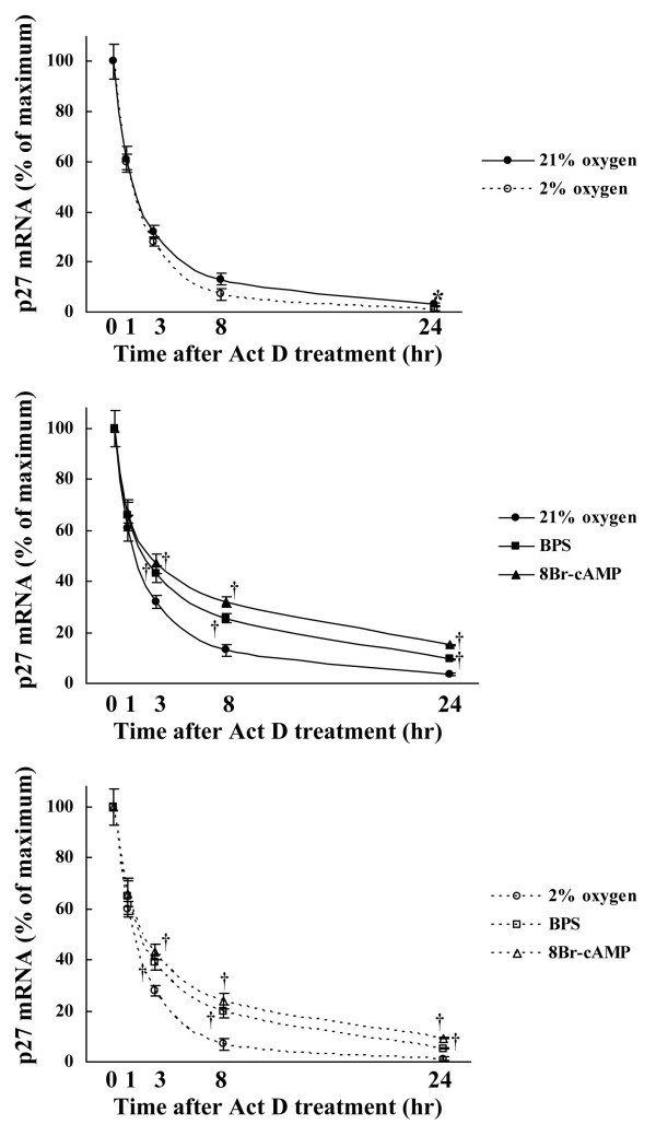 Effect of BPS and 8-Br-cAMP on p27 kip1 mRNA stability during hypoxia . Cultured HPASMC were exposed to 21% or 2% oxygen concentrations with or without 10 μM of BPS or 1 mM 8-Br-cAMP for indicated periods. The p27 kip1 mRNA stability was measured after adding 400 nM of Act D using Real-time RT-PCR using LightCycler™. Degradation of p27 kip1 mRNA was significantly suppressed by BPS and 8-Br-cAMP under both normoxic and moderately hypoxic conditions, and mRNA stability was slightly decreased by moderate hypoxia. Graphs show % maximal p27 kip1 mRNA expression. Line with solid circles, 21% oxygen; dotted line with open circles, 2% oxygen; line with solid squares, 21% oxygen and BPS; line with solid triangles, 21% oxygen and 8-Br-cAMP; dotted line with open squares, 2% oxygen and BPS; dotted line with open triangle, 2% oxygen and 8-Br-cAMP. Data are expressed as means ± SE (n = 6). *P