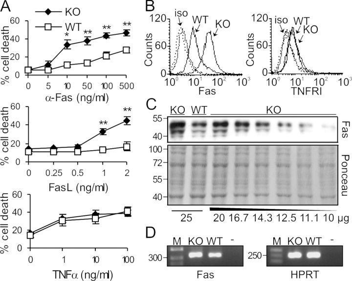 Selective hypersensitivity of Raf-1–deficient MEFs to Fas activation correlates with increased Fas expression. (A) Raf-1 KO MEFs are hypersensitive toward apoptosis induced by an agonistic Fas antibody or by FasL, but not by TNFα. MEFs were treated either with αFas, with recombinant FLAG-tagged FasL cross-linked with 1 μg/ml α-FLAG M2 antibody, or with recombinant mouse TNFα at the concentrations indicated for 22 h in the presence of 5 μg/ml Chx and 0.5% FCS. Cell death was determined by CytoTox 96 assay. The values represent the mean ± SD (error bars) of three independent cell lines. *, P