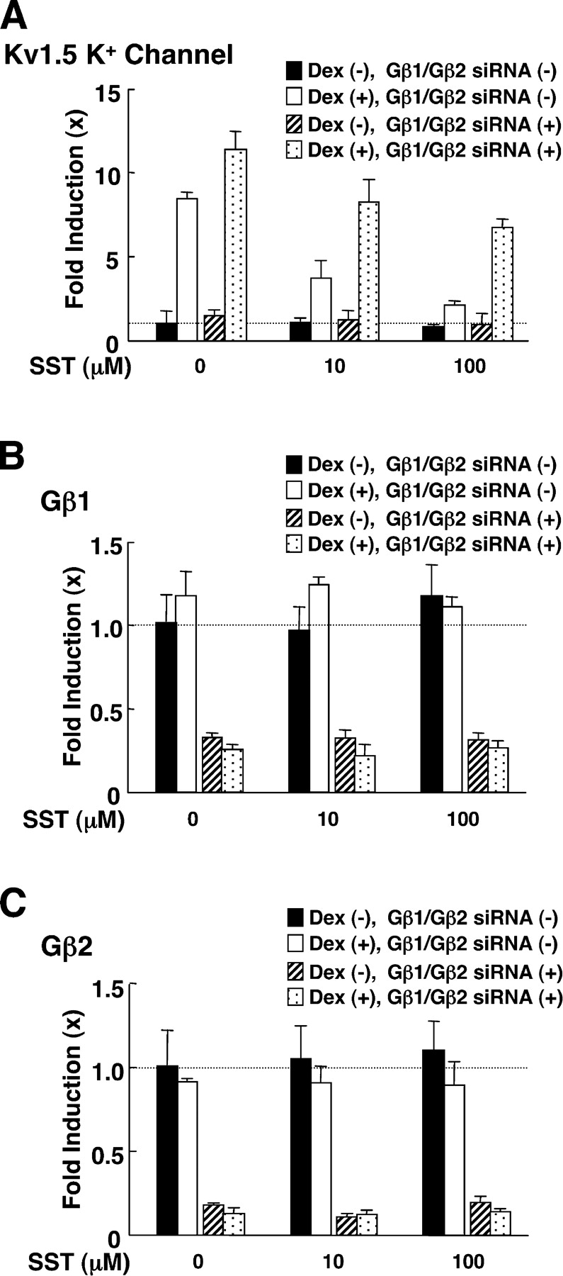 Somatostatin suppressed dexamethasone-stimulated transcriptional activity of the Kv1.5 potassium channel gene, whereas abrogation of Gβ1 and Gβ2 attenuated the somatostatin effect in GH3 cells. GH3 cells were transfected with control or Gβ1 and Gβ2 siRNAs, and were treated with 10 −6 M of dexamethasone and/or the indicated amounts of somatostatin for 24 h. Total RNA was then purified from the cells and the amounts of Kv1.5 potassium channel (A), Gβ1 (B), Gβ2 (C), or RPLP0 mRNAs were determined by RT-PCR. Bars show mean ± SEM of their fold induction over baseline.