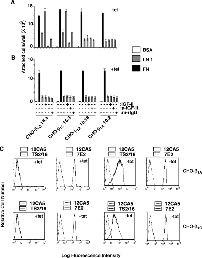 IGF stimulates adhesion to LN-1 of β 1C -expressing cells. β 1C -CHO (clones 16.3 and 16.4) and β 1A -CHO (clones 10.18 and 10.2) clones were cultured in the absence (A) or in the presence (B) of tet for 48 h. Cells were labeled using 51 Cr-sodium chromate for 1 h at 37°C. 51 Cr-labeled cells were incubated in the presence or in the absence of purified rabbit Ab to IGF-II or ni-rIgG for 1 h on ice. Cells were plated on BSA, LN-1, or FN at 37°C for 2 h in the presence or in the absence of IGF-II. Attached cells were washed, lysed, and the amount of 51 Cr associated with the attached cells was measured by liquid scintillation counting. Data are expressed as mean ± SEM. (C) Representative β 1C -CHO and β 1A -CHO clones were cultured in the absence or in the presence of tet for 48 h and analyzed by FACS ® using a β 1 integrin Ab TS2/16 specific to human β 1 or 7E2 specific to hamster β 1 or, as negative control, 12CA5.