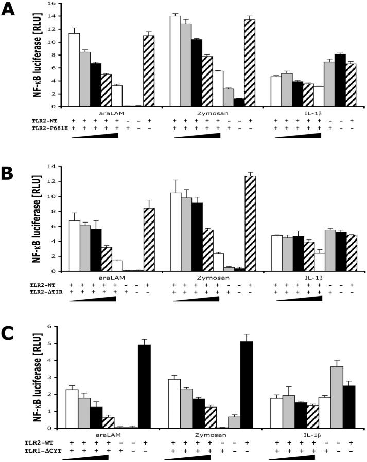 TLR2 and TLR1 mutants inhibit NF κ B activation in HEK 293 cells in stimulation with araLAM and zymosan. (A) The response of HEK293-CD14 cells to araLAM and zymosan is inhibited by a single point mutated TLR2 construct, TLR2-P681H. HEK293-CD14 cells were cotransfected with 5 ng TLR2-WT DNA and increasing amounts of TLR2-P681H (from 5 to 200 ng DNA). After 6 h of stimulation with 1 μg/ml araLAM and 10 μg/ml zymosan, cells were lysed and NFκB luciferase reporter gene activity was measured. IL-1β was used as a positive control. Luciferase activity is expressed in normalized RLU as the ratio of NFκB-dependent firefly luciferase activity to NFκB-independent renilla luciferase activity. Data shown are the mean ± SD of triplicate wells. (B) The response of HEK293-CD14 cells to araLAM and zymosan is inhibited by expression of a TLR2 mutant missing the TIR domain TLR2-ΔTIR. HEK293-CD14 cells were cotransfected with 5 ng TLR2-WT DNA and increasing amounts of TLR2-ΔTIR (from 5 to 200 ng DNA). After 6 h of stimulation with 1 μg/ml araLAM and 10 μg/ml zymosan, cells were lysed and NFκB luciferase reporter gene activity was measured. IL-1β was used as a positive control. (C) The response of HEK293-CD14 cells to araLAM and zymosan is inhibited by expression of a cytoplasmic deletion mutant of TLR1, TLR1-Δcyt. HEK293-CD14 cells were cotransfected with 5 ng TLR2-WT DNA and increasing amounts of TLR1-Δcyt (from 5 to 200 ng DNA). After 6 h of stimulation with 1 μg/ml araLAM and 10 μg/ml zymosan, cells were lysed and NFκB luciferase reporter gene activity was measured. IL-1β was used as a positive control.