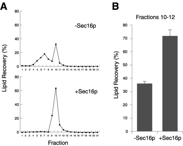 Sec16p stimulates COPII vesicle formation from liposomes. (A) Liposomes (corresponding to 12.5 μg phospholipids) were incubated with COPII proteins (80 μg/ml Sar1p, 130 μg/ml Sec23/24p, and 150 μg/ml Sec13/31p), MBP–Sec16p (11 μg/ml, where indicated), and GMP-PNP (100 μM) for 30 min at 27°C, and then sedimented to equilibrium on sucrose density gradients. The fluorescence of Texas red–labeled liposomes in each fraction was measured. (B) Average fluorescence of COPII vesicle peak (fractions 10–12) for three independent gradients (error bars are SEM).