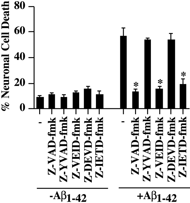Inhibition of Aβ 1–42 - mediated neuronal cell death with caspase inhibitors. Neurons were preincubated for 1 h in the presence of 5 μM of each inhibitor, microinjected with Aβ 1–42 peptide and incubated for 24 h in the presence of the inhibitors before revealing cell death of injected cells with TUNEL. The data represent the mean ± SEM of three independent experiments. One-way ANOVA (df = 11) followed by Sheffé's test showed a statistically significant difference between Aβ 1–42 and Aβ 1–42 + Z-VAD-fmk, Z-VEID-fmk, and Z-IETD-fmk. *, P