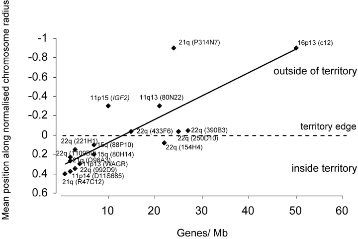 Correlation between gene density and localization relative to chromosome territories. Mean probe positions (normalized for territory radius) relative to the edge of chromosome territories measured in hybridizations to two-dimensional MAA-fixed lymphoblast nuclei, plotted against gene density (Genes/Mb) for all of the regions considered in this analysis. A value of 0 on the y-axis represents the edge of the chromosome territory and negative values indicate that the mean locus position is outside of the chromosome territory. The best-fit line was determined using Microsoft Excel. The equation for the line is y = −0.0242x + 0.315 and r 2 = 67%.