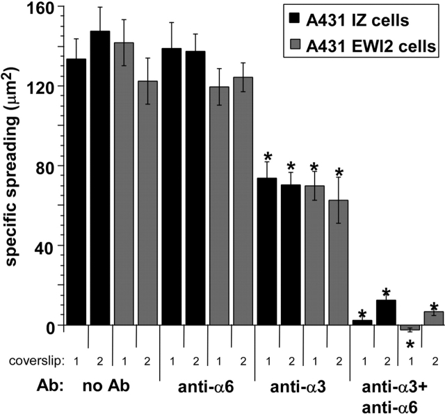 Quantitation of A431 IZ cells and A431 EWI-2 cell spreading assays on laminin-5. The areas of 20–45 cells per coverslip were measured using Scion Image v1.62 software. Specific spreading was calculated by subtracting the mean area of cells fixed immediately after plating from the mean area of cells fixed at the end of the assay. Error bars indicate the SEM for each coverslip. Two coverslips per condition were examined; results for each coverslip are shown individually. Asterisk Indicates statistically significant difference between antibody-treated cells and the coverslips in the no antibody controls (P