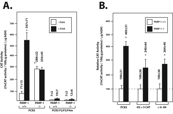 rPARP-1 promoter activity in PARP-1 +/+ and PARP-1 -/- cells . ( A ) The recombinant plasmids PCR3 and PCR3F2/F3/F4m were transfected into both PARP-1 +/+ and PARP-1 -/- cells grown with or without the PARP-1 inhibitor PJ34. CAT activities were measured and normalized to the amount of hGH secreted into the culture medium. Values are expressed as ((%CAT activity/100 μg proteins)/ng hGH). Asterisks (*) indicate CAT activities from cells exposed to PJ34 that are statistically different from those measured when cells are transfected with pCR3 in the absence of inhibitor whereas † corresponds to CAT activities in PARP-1 -/- cells that are statistically different from those measured in PARP-1 +/+ cells ( P