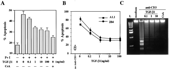 TGF-β1 decreases AICD in human peripheral blood T cells and murine T cell hybridomas. (A) PBMCs were activated for 6 d with OKT3 (100 ng/ml) and then restimulated with PMA (50 ng/ml) and ionomycin (1 μg/ml) (P+I) for 16 h with the indicated concentration of TGF-β1 or CsA (100 ng/ml). Viability was assessed by propidium iodide uptake and analyzed using a FACScan ® . Apoptosis was confirmed by morphological assessment after staining with Hoechst 33342 at 10 μg/ml (not shown). (B) A1.1 or 2B4.11 T hybridoma cells were left unactivated (open symbols) or were activated (filled symbols) for 16 h with anti-CD3 antibody (2C11) in the presence of the indicated concentration of TGF-β1. Viability was assessed as in A. (C) A1.1 T hybridoma cells were cultured with medium alone or activated for 12 h with anti-CD3 antibody in the presence of the indicated concentrations of TGF-β1 (ng/ml) or CsA (100 ng/ml). DNA fragmentation associated with apoptosis was assessed by agarose gel electrophoresis.