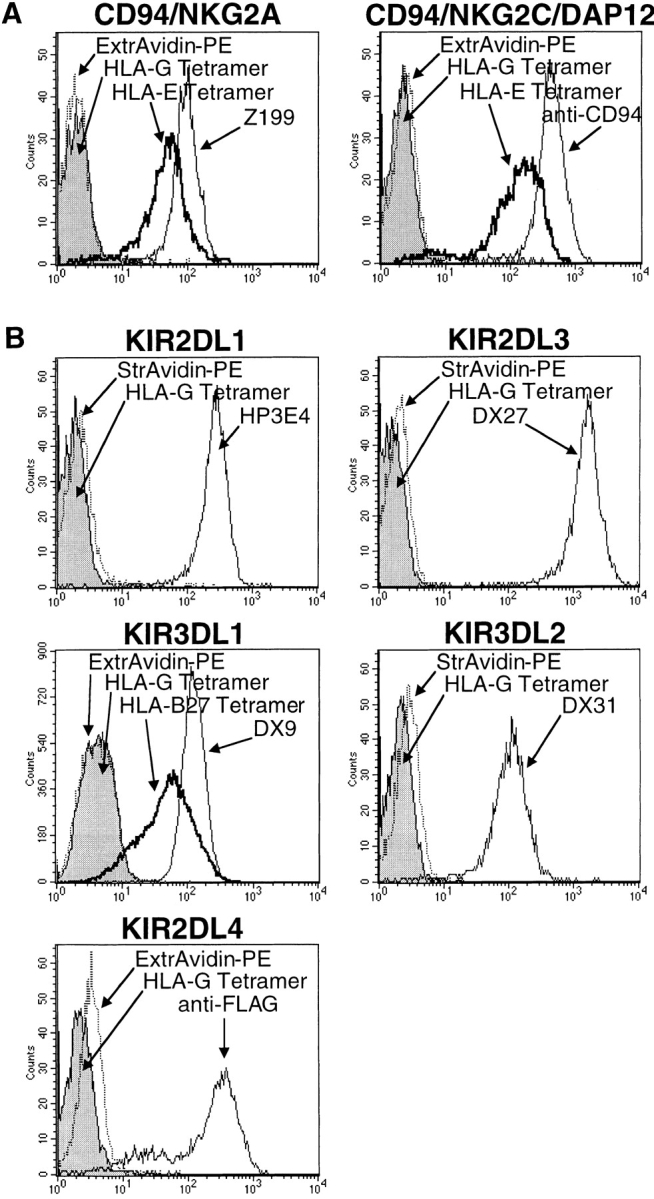 HLA-G tetramers do not bind to NK receptors. Baf3 cells transfected (A) with CD94 and NKG2A or CD94, NKG2C, and DAP12, or (B) with several KIR receptors were stained with HLA-G, HLA-E*0101, or HLA-B*2705 tetramers, or ExtrAvidin-PE or Streptavidin-PE controls. Expression of transgenes was verified with mAbs recognizing CD94, KIRs, or the FLAG peptide epitope, as indicated.
