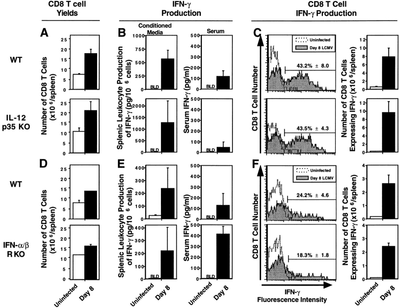 T cell responses in mice lacking endogenous sources of either IL-12 or IFN-α/β. Mice, WT and IL-12p35 KO 129/B6 (A–C) or WT and IFN-α/βR KO 129 (D–F), were either uninfected (open bars or symbols) or infected i.p. (closed bars or symbols) on day 0 with 2 × 10 4 PFU LCMV Armstrong strain. On day 8 after infection, blood and spleens were harvested and processed. Total numbers of CD8 T cell splenic leukocytes were calculated by multiplying the percentages of CD8 cells, determined by flow cytometry, with the total cell yields (A and D). IFN-γ levels were measured, in media conditioned with splenic leukocytes and in serum samples, by ELISA (B and E). For flow cytometric analysis of cytoplasmic IFN-γ expression, splenic leukocytes were stimulated for 6 h with anti–CD3, with Brefeldin A during the last 2 h. Cells were collected and stained for cell surface expression of CD8, CD4, and cytoplasmic expression of IFN-γ (C and F). Histogram plots were formed by gating on the CD8 population, and displaying CD8 T cell number versus IFN-γ fluorescence intensity. Numbers of CD8 T cells expressing IFN-γ were calculated by multiplying the percentage of CD8 T cells expressing IFN-γ by the number of CD8 T cells per spleen (× 10 6 ), and given as means ± SEM. Results are representative of two or more repetitive experiments with two to four mice per uninfected group and three to four mice per infected group. Data are shown as means ± SEM.