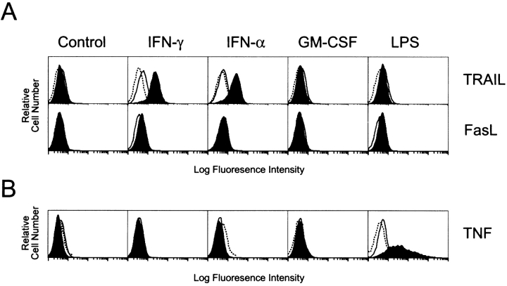 TRAIL, FasL, and TNF expression on human Mφ. (A) Mφ were incubated for 2 or 12 h in the absence or presence of IFN-γ, IFN-α, GM-CSF, or LPS and then analyzed for TRAIL or FasL surface expression. Filled histograms represent staining at 12 h by either M181 (anti-TRAIL mAb) or NOK-1 (anti-FasL mAb). Open histograms represent staining at 2 h with the same mAb, whereas dotted histograms represent staining with isotype control mAb. (B) Mφ were incubated as in A and then analyzed for TNF surface expression. Filled histograms represent staining at 2 h by mAb11 (anti-TNF mAb). Open histograms represent staining at 12 h with the same mAb, whereas dotted histograms represent staining with isotype control mAb. Histograms represent 10 4 gated Mφ in all conditions, and viability was > 95% as assessed by propidium iodide exclusion. These observations were reproduced using Mφ from at least five different donors.