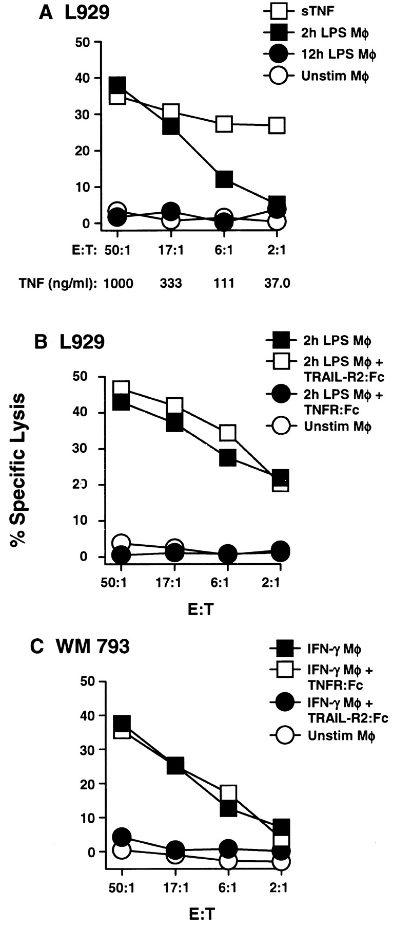 TNF-mediated apoptosis by human Mφ occurs after stimulation with LPS but not IFN-γ. (A) Mφ were incubated in the absence or presence of LPS for 2 or 12 h and then cultured for 8 h with 51 Cr-labeled L929 target cells at the indicated E/T ratios. As a positive control, soluble (s)TNF was added to targets cells at the indicated concentrations. (B) Inclusion of TNFR: Fc (20 μg/ml) to 2-h LPS-stimulated Mφ inhibited the killing of L929 target cells, whereas addition of TRAIL-R2:Fc (20 μg/ml) did not. (C) Killing of WM 793 tumor cells by Mφ stimulated with IFN-γ for 12 h can be inhibited by TRAIL-R2:Fc (20 μg/ml), but not TNFR:Fc (20 μg/ml). Data points represent the mean of triplicate wells, and the experiments were repeated at least three times with similar results. For clarity, SD bars were omitted from the graphs, but were