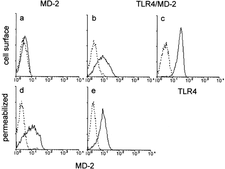 Membrane anchoring of MD-2 via TLR4. A stable line expressing MD-2 with the flag epitope was stained with the anti-flag mAb, followed by goat anti–mouse IgG–FITC (a and d). Staining with cell permeabilization is shown in d. Another stable transfectant was used that expressed MD-2 with the protein C epitope and TLR4 in b, c, and e. Cell surface MD-2 and TLR4 are shown with the rat anti–protein C mAb or the mouse anti–human TLR4 mAb HTA125 (b and c, respectively). MD-2 expression in permeabilized cells is shown in e. The second reagents used were goat anti–rat IgG–PE or goat anti–mouse IgG–FITC, respectively. Control histograms stained with isotype-matched mouse or rat mAb are shown (dotted lines).