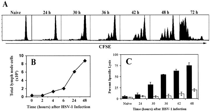 Concurrent in vivo proliferation and CTL activity by gB-specific CD8 + T cells in the PLNs after cutaneous infection with HSV-1. (A) CFSE-labeled lymph node cells from gBT-I.1 mice were transferred into C57BL/6 mice before infection with HSV-1. PLN cells were isolated at various times after infection (24–72 h) and dilution of the CFSE fluorescence analyzed by gating on live CD8 + T cells. (B) Cellularity within the draining lymph nodes over a 48-h period was determined using cell suspensions obtained from the PLNs of mice after foot-pad HSV-1 infection. (C) Mice that had (black bars) or had not (white bars) received 10 6 gBT-I.1 cells 24 h earlier were infected with HSV-1 in the footpad and left for various times as shown before intravenous transfer of CFSE-labeled syngeneic target cells. gB-peptide–pulsed splenocytes were labeled with a high concentration of CFSE (CFSE hi ) while unpulsed control targets were labeled with a low concentration of CFSE (CFSE lo ). 4 h after target cell transfer, mice were killed and PLN cells analyzed for relative elimination of the CFSE hi versus CFSE lo populations. Percent specific lysis was calculated as described in reference 5. Error bars represent SD.