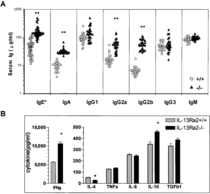 Serum IgE, <t>IgA,</t> <t>IgG2a,</t> and <t>IgG2b,</t> and immune-dependent IFN-γ production are elevated in IL-13R α 2 − / − mice. (A) Analysis of wild-type serum Ig isotypes. Sera from 24–32 individual animals were analyzed. Data represent mean of triplicate wells. **, P