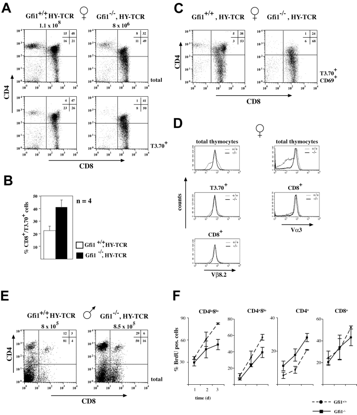 Lack of Gfi1 alters MHC class I–restricted positive selection. (A) Flow cytometric analysis of CD4 and CD8 expression of total or T3.70 + thymocytes from female WT (Gfi1 +/+ ) or Gfi1 −/− mice expressing the HY-TCR transgene. Total thymocyte numbers and the percentages of the respective DN, DP, and SP cells are indicated. Experiments are representative for five different sets of mice. (B) Compilation of percentages of CD8 + /T3.70 + cells from seven female Gfi1 +/+ HY-TCR animals (open bar) and from seven female Gfi1 −/− HY-TCR animals (solid bar). (C) CD69 + /T3.70 + thymocytes from female WT (Gfi1 +/+ ) or Gfi1 −/− mice expressing the HY-TCR transgene. Total thymocyte numbers and the percentages of the respective DN, DP, and SP cells are indicated. Experiments are representative for five different sets of mice. (D) CD8 + or total thymocytes of both HY-TCR transgenic mice and Gfi1 −/− carrying the HY-TCR transgene were analyzed with an antibody against the Vβ8.2 or the Vα3 variable chain of the HY-TCR. The Vα3 chain was detected with the T3.70 clonotypic antibody. (E) Flow cytometric analysis of CD4 and CD8 expression on thymocytes from 8-wk-old male WT (Gfi1 +/+ ) or Gfi1 −/− mice expressing the HY-TCR transgene. Total thymocyte numbers and the percentages of the respective DN, DP, and SP cells are indicated. (F) Three WT and three Gfi1 null mice were analyzed for BrdU incorporation for each time point over a period of 3 d. The indicated cell subsets were analyzed by flow cytometric measurements and the percentages of BrdU + cells were determined. Values are means with standard deviations and are plotted against the time in days (d).