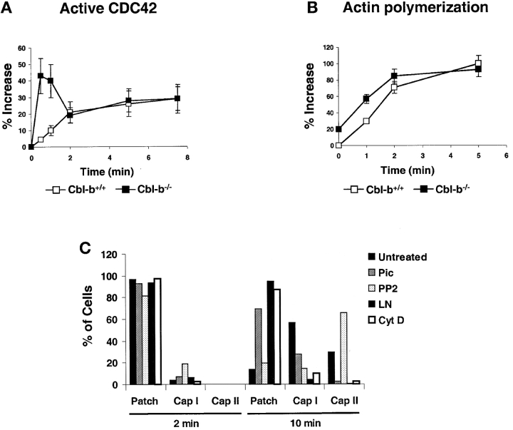 CDC42 activation and actin polymerization are enhanced in Cbl-b–deficient B cells. (A) Purified splenic B cells from Cbl-b +/+ and Cbl-b −/− mice were treated to cross-link the BCR as in Fig. 2, A–C , incubated at 37°C for the times indicated, fixed, permeabilized, and incubated with the WASP-GBD-GFP fusion protein followed by incubation with FITC-conjugated-rabbit antibodies specific for GFP and then FITC-conjugated goat antibodies specific for rabbit Ig. The cells were analyzed by flow cytometry and the results presented as the percent increase in mean fluorescence of activated B cells relative to the mean fluorescence of resting B cells. (B) B cells were treated as in panel A and permeabilized cells were stained with Alexa 488–conjugated phalloidin and analyzed by flow cytometry. Shown is the percent increase of the mean fluorescence of stimulated B cells relative to the mean fluorescence intensity of resting cells at each time point. (C) Splenic B cells from Cbl-b −/− mice were pretreated with the following inhibitors: piceatannol (100 μM for 1 h at 37°C) a Syk inhibitor(38); PP2 (100 μM for 1 h at 37°C) a Src-family kinase inhibitor (reference 37 ); and Cytochalasin D (10 μM for 1 h at 0°C; reference 36 ) or Latrunculin (10 μM for 30 min at 37°C; reference 36 ) inhibitors of the actin cytoskeleton. The pretreated cells were incubated with a rat mAb specific for IgM, washed and incubated for 2 or 10 min at 37°C with biotin-labeled F(ab′) 2 goat antibodies specific for rat IgG, fixed and stained with Alexa 488–labeled streptavidin to visualize the BCR. The cells were examined by fluorescence microscopy and the number of cells showing a patch, Cap I or Cap II morphology were scored.
