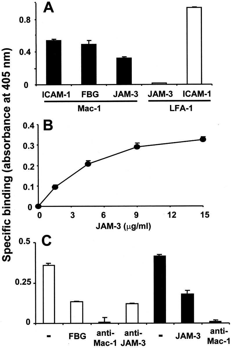 Interaction between purified JAM-3 and Mac-1 proteins. (A) The binding of ICAM-1, fibrinogen (FBG), or JAM-3 to immobilized Mac-1 (black bars) and the binding of JAM-3 or ICAM-1 to immobilized LFA-1 (white bars) was studied. (B) Dose-dependent specific binding of JAM-3 to immobilized Mac-1 is shown. (C) The binding of JAM-3 (white bars) to immobilized Mac-1 was analyzed in the absence (−) or presence of fibrinogen (FBG, 20 μg/ml), mAb against Mac-1 or mAb against JAM-3 (each 10 μg/ml). The binding of fibrinogen (black bars) to immobilized Mac-1 was studied in the absence (−) or presence of purified JAM-3 (20 μg/ml) or of mAb against Mac-1 (10 μg/ml). Specific binding is expressed as absorbance at 405 nm. Data are mean ± SD ( n = 3) of a typical experiment; similar results were observed in at least three separate experiments.