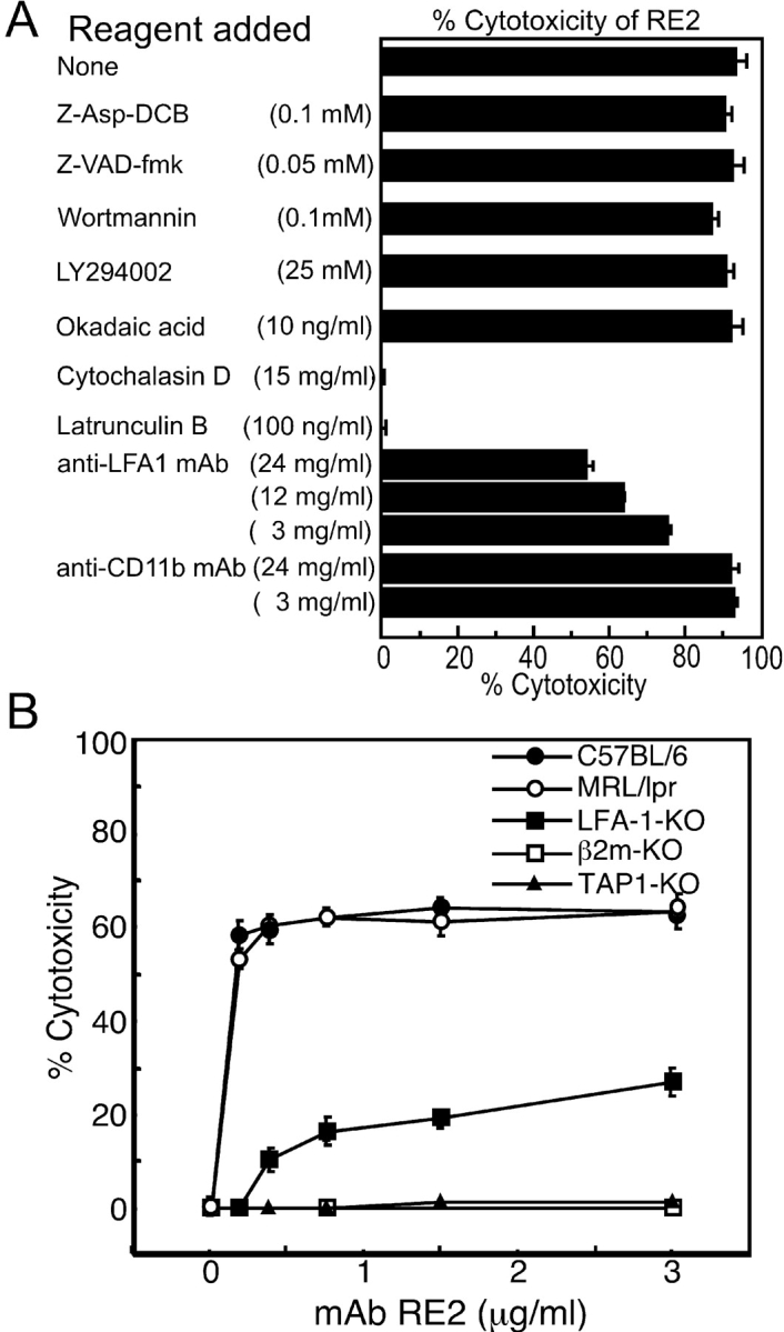 (A) Effects of potential inhibitors on cytotoxic activity of mAb RE2 to T cell clone MS-S2 cells. Inhibitors were added 1 or 2 h before the cytotoxicity assay. Percentages of dead cells were determined by trypan blue dye exclusion. (B) Cytotoxic sensitivity to mAb RE2 of Con A–activated splenic cells from various mouse strains. Splenic cells were first activated with 2 μg/ml of Con A for 24 h at 37°C, and then incubated with given concentrations of mAb RE2 for 1 h in the absence of complement.