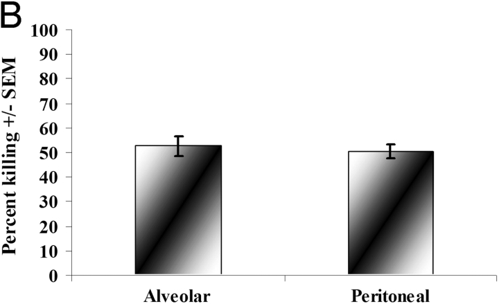 Reduction in P. carinii viability during coculture with alveolar and peritoneal macrophages. Alveolar or peritoneal macrophages were isolated from 6–8-wk-old, male C57BL/6 mice and cocultured overnight with a constant number of P. carinii organisms. Controls included P. carinii cultured in the absence of macrophages. Thereafter, RNA was isolated from the contents of each well and quantitative real time PCR for P. carinii rRNA copy number was performed. Cumulative results from six separate experiments for P. carinii rRNA copy number (A) and percent killing (B) are shown. *, significant differences between alveolar macrophages or peritoneal macrophages compared with P. carinii (PC) alone (P = 0.0013 and 0.0017 for alveolar and peritoneal macrophages, respectively; A). Data are expressed as mean copy number (A) or mean percent killing (B) ± SEM.