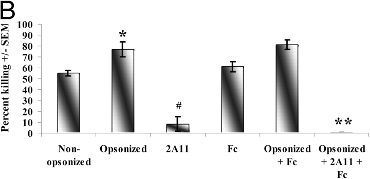 The effects of Dectin-1 blockage in the presence of FcγRII/III-mediated phagocytosis. Alveolar macrophages were isolated from 6–8-wk-old, male C57BL/6 mice and added to P. carinii in the presence of nonopsonizing or opsonizing sera (diluted 1:100; A), pretreated with 2 μg/ml 2A11 for 30 min at 37°C with or without opsonizing sera (A), or pretreated with 2 μg/ml 2A11 and anti-CD16/CD32 (Fc) for 30 min at 37°C with and without opsonizing sera (B), and added to P. carinii overnight for a final macrophage to P. carinii cyst ratio of 100:1 (A). Controls included P. carinii cultured without macrophages in the presence of nonopsonizing or opsonizing sera alone or containing the specific antibody. Thereafter, RNA was isolated from the contents of each well and quantitative real time PCR for P. carinii rRNA copy number was performed. Cumulative results from four separate experiments are shown. In A: *, significant differences between nonopsonizing versus opsonizing sera (P = 0.0002); #, significant differences between nonopsonizing sera and 2A11 (P = 0.0001); **, significant differences between 2A11 and opsonizing sera plus 2A11 (P = 0.0005). In B: *, significant differences between nonopsonizing versus opsonizing sera (P = 0.007); #, significant differences between nonopsonizing sera and 2A11 (P = 0.0001); **, significant differences between 2A11 and opsonizing sera plus 2A11 plus Fc Block (Fc; P