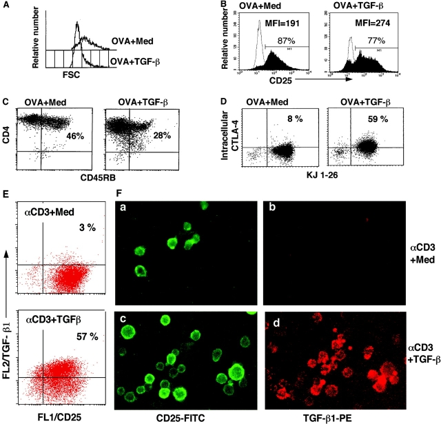 Phenotype of TGF-β–induced anergic/suppressor T cells. (A–D) DO11.10 TCR transgenic spleen cells were stimulated with OVA in the absence (OVA + Med) and presence of TGF-β (OVA + TGF-β) for 7 d. CD4 + T cells were purified and stained with PE–anti-CD4 and FITC–anti-CD25, or FITC–anti-CD45RB. CD4 + T cells ( > 98% KJ1-26 + ) were gated, and histogram profiles of cell size on FSC (A) and CD25 (B) are displayed. Profile of dual CD4 and CD45RB expression (C) CD4 + T cells purified at day 7 after the primary cultures were rested in complete DMEM for 56 h. Viable CD4 + T cells were stained with FITC-anti–KJ1-26 and intracellular PE-anti–CTLA-4. (D) TGF-β–induced anergic/suppressor T cells express membrane-bound TGF-β (E and F). B6 CD4 + CD25 − T cells were cultured with anti-CD3 and APCs in the absence (panels a and b, αCD3 + Med) or presence of TGF-β (panels c and d, αCD3 + TGF-β) for 3 d. After extensive washes, cells were stained with FITC–anti-CD25 and biotinylated chicken anti–TGF-β1, followed by streptavidin-PE. Cells were analyzed on flow cytometry and under immunofluorescence microscopy.