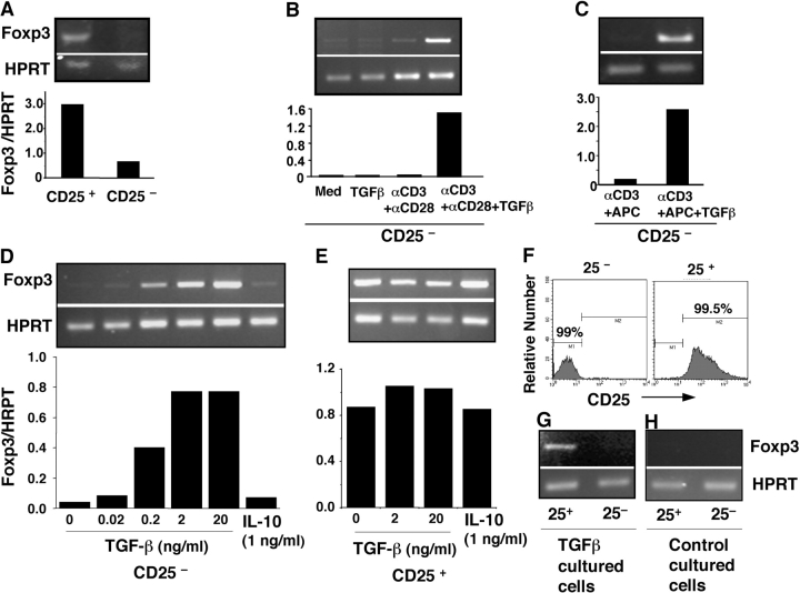TGF-β and TCR costimulation induces Foxp3 expression in CD4 + CD25 − naive responder T cells. (A) B6 spleen cells were sorted into CD4 + CD25 − (CD25 − ) and T reg (CD25 + ) populations. cDNA from each population was subjected to nonsaturating PCR using Foxp3 or HPRT-specific primers, and data are presented as Foxp3 /HPRT ratio. (B) CD25 − cells were cultured with medium or 2 ng/ml TGF-β1 (24 h) or stimulated with platebound anti-CD3 and soluble anti-CD28 in the absence or presence of TGF-β1 (72 h) and assessed for the expression of Foxp3 by RT-PCR. (C) CD25 − cells were activated with soluble anti-CD3 and APCs with or without TGF-β for 3 d and assessed for Foxp3 expression. (D) Dose dependence of TGF-β and failure of IL-10 on Foxp3 induction in CD25 − naive T cells. CD25 − cells were cultured as in B in the presence of indicated concentrations of TGF-β or recombinant murine IL-10. (E) Both TGF-β and IL-10 failed to further enhance Foxp3 expression in T reg . Freshly isolated T reg were activated with platebound anti-CD3, soluble anti-CD28, and IL-2 (100 U/ml) with or without TGF-β or IL-10, and Foxp3 expression was assessed by RT-PCR. (F and G) Flow cytometry analysis (F) and Foxp3 expression (G) of CD25 + or CD25 − T cells sorted from TGF-β– and anti-CD3–costimulated naive CD25 − T cells (day 7). (H) No Foxp3 expression in both CD25 + and CD25 − subsets purified from control (anti-CD3 only) stimulated CD25 − naive cells (day 7). The data in the figure are representative of at least three experiments.