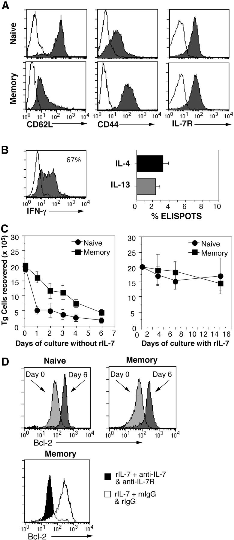 In vivo–primed TCR transgenic memory CD4 cells survive in response to rIL-7 in vitro. Purified naive OT-II Thy 1.1 CD4 cells were transferred into C57BL/6 Rag2 − mice (5 × 10 6 cells/recipient) and immunized with OVA protein and adjuvant as indicated in Materials and Methods. 1 mo later, resting memory OT-II cells were isolated and compared with freshly isolated naive OT-II cells. (A) Phenotype of memory OT-II cells. Naive and memory OT-II cells were stained for expression of CD62L, CD44, and IL-7Rα and analyzed by flow cytometry (shaded histograms; unshaded histograms denote background staining). (B) Frequencies of effector cytokine producers among memory OT-II cells. Memory OT-II Thy 1.1 cells were restimulated with OVA peptide in the presence of splenic APC and tested for secretion of IFN-γ at 12 h by ICS, and after enrichment of Thy 1.1 cells, for production of IL-4 or IL-13 at 24 h by ELISPOT analysis. (C) IL-7 promotes survival of OT-II cells. Naive and memory OT-II Thy 1.1 cells were cultured at 10 6 /ml for the indicated number of days without or with rIL-7 at 10 ng/ml (left and right, respectively). (D) Blocking IL-7 prevents up-regulation of Bcl-2. Naive (top left) and memory (top right) OT-II Thy 1.1 CD4 cells were stained for expression of Bcl-2 (light gray histograms). The cells were cultured as in C for 6 d with 10 ng/ml rIL-7 and stained for BcL-2 (dark gray histograms). Memory cell cultures were also treated with either 10 μg/ml each anti–IL-7 and anti–IL-7R mAb or with an equivalent amount of rat and mouse IgG (bottom, rIgG and mIgG, respectively). The cells were stained for Bcl-2 on day 6 after culture with blocking mAb (shaded histogram) or with control mAb (unshaded histogram).