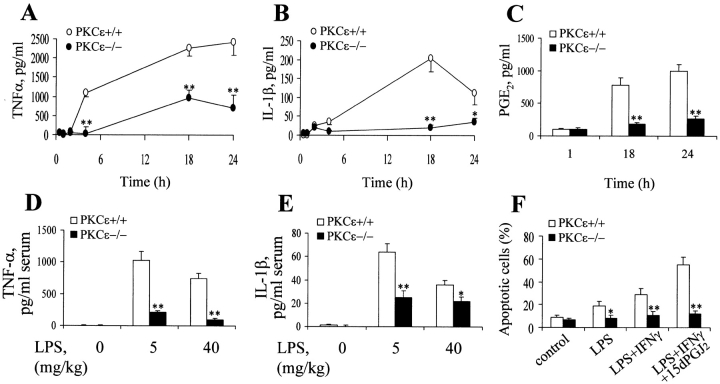 The release of proinflammatory <t>cytokines</t> and prostaglandin E 2 are impaired in PKCε −/ − mice. (A–C) Thioglycollate-elicited peritoneal macrophages were activated for the indicated times with 200 ng/ml of LPS and 20 U/ml of IFNγ. The amount of TNF-α, IL-1β, and PGE 2 in the culture medium was then determined. (D–E) Bar graphs demonstrating the serum levels of TNF-α (1 h after injection) and IL-1β (4 h after injection) after the intraperitoneal injection of either 5 mg/kg or 40 mg/kg of LPS. (F) Apoptosis of thioglycollate-elicited peritoneal macrophages 24 h after activation by LPS (200 ng/ml), LPS plus IFNγ (200 ng/ml and 20 U/ml, respectively), or LPS, IFNγ, and 15dPGJ 2 (2 μM). Results show the mean ± SEM of three experiments. The * and ** denote P